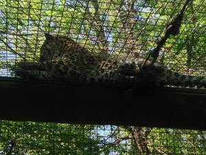 Click on the Leopard to access our photos!